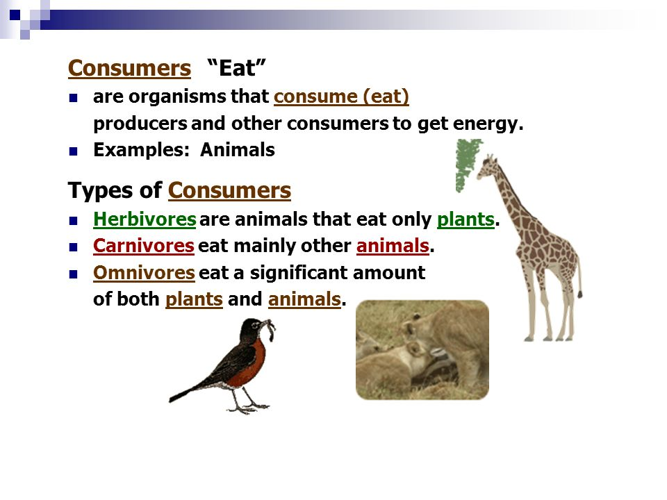 An ecosystem is a complete community of - ppt video online ...