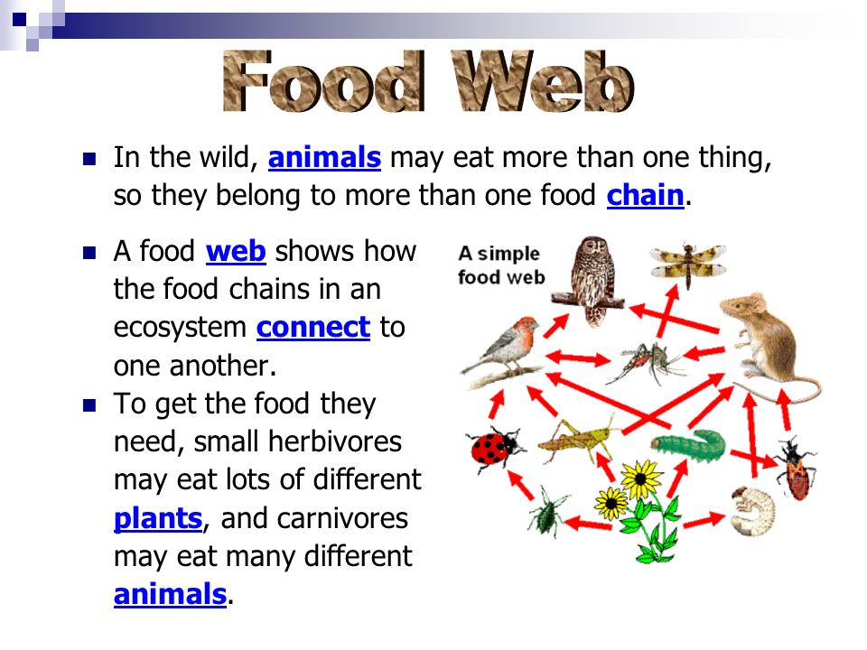 Food Web In the wild, animals may eat more than one thing,