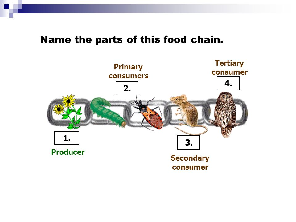 Name the parts of this food chain.