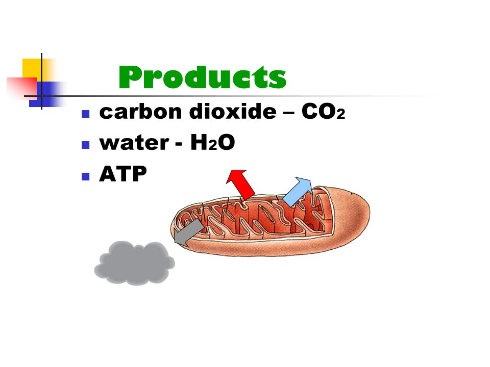 Products carbon dioxide – CO2 water - H2O ATP