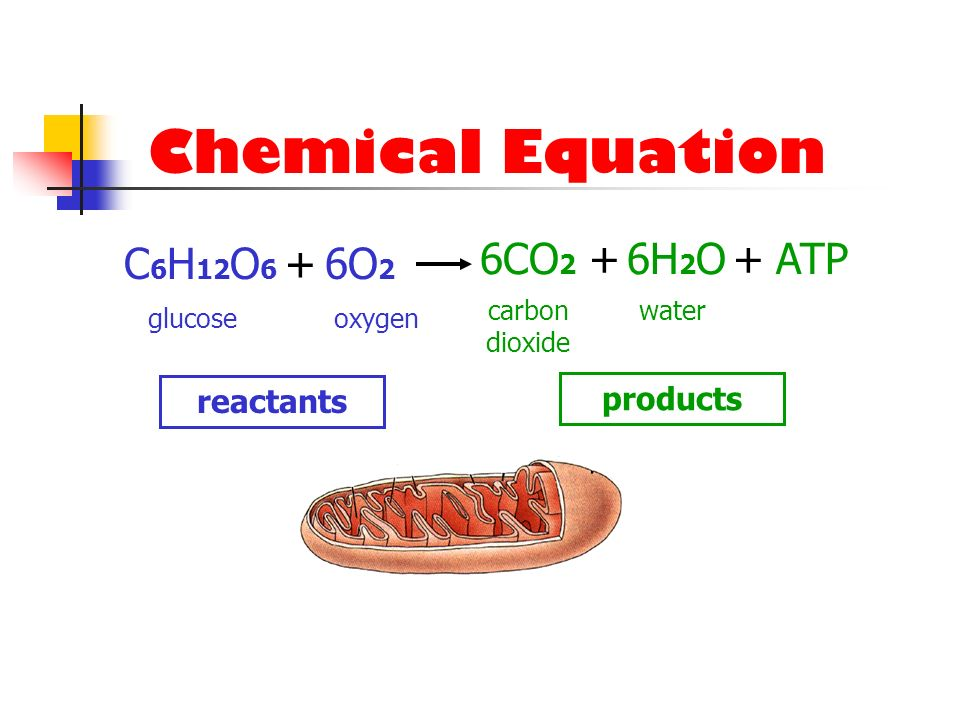 Chemical Equation C6H12O6 + 6O2 6CO2 + 6H2O + ATP reactants products