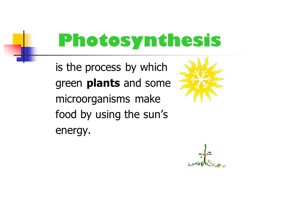 Photosynthesis is the process by which green plants and some