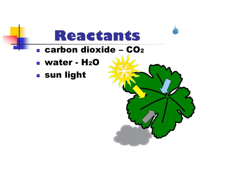Reactants carbon dioxide – CO2 water - H2O sun light