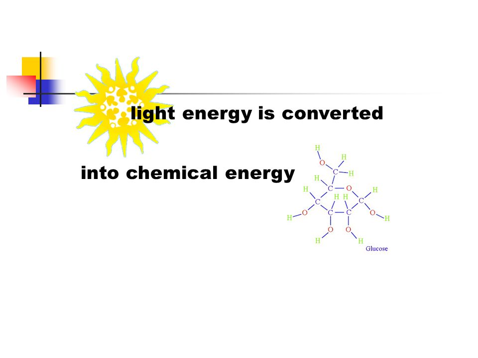 light energy is converted