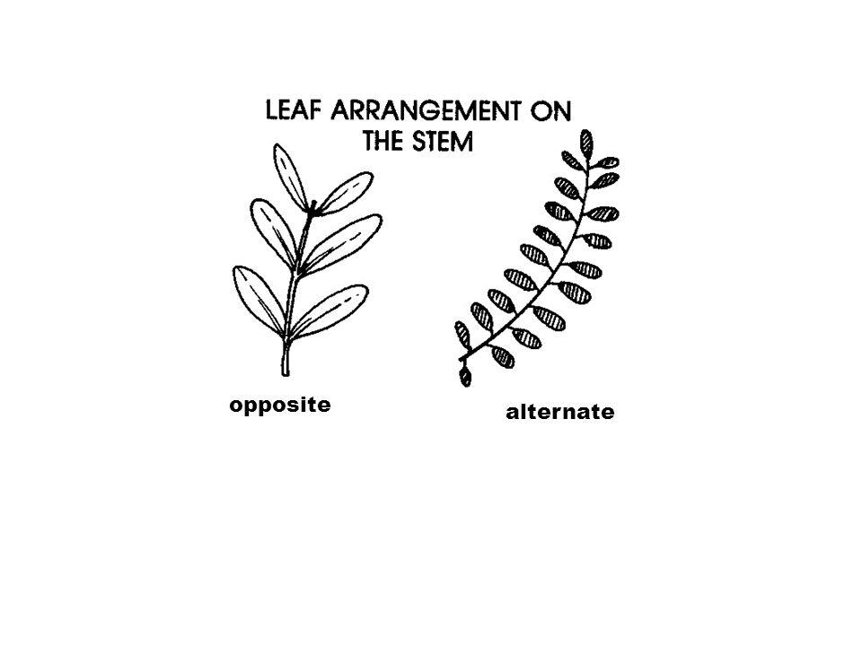opposite alternate