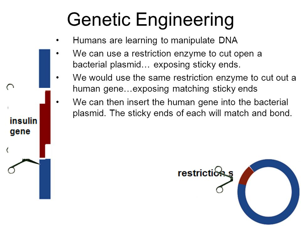 genetic engineering can save human lives The hazards of human developmental gene modification   have lent new urgency to calls for genetic engineering  untested methods to save existing lives.