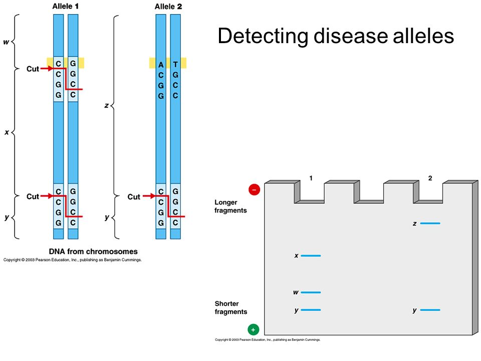 Detecting disease alleles