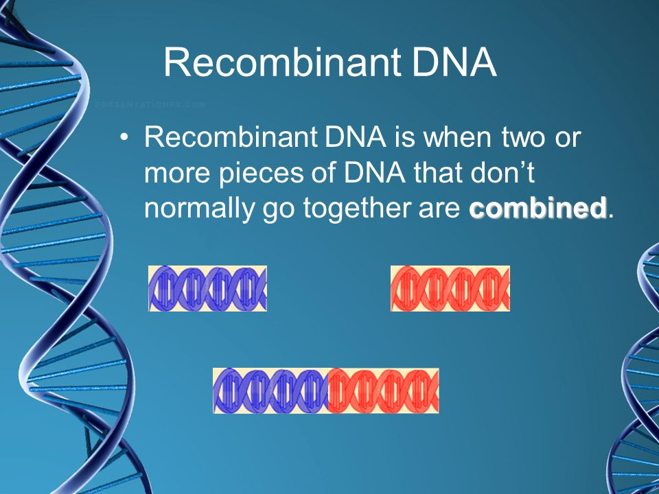 Recombinant DNA Recombinant DNA is when two or more pieces of DNA that don't normally go together are combined.