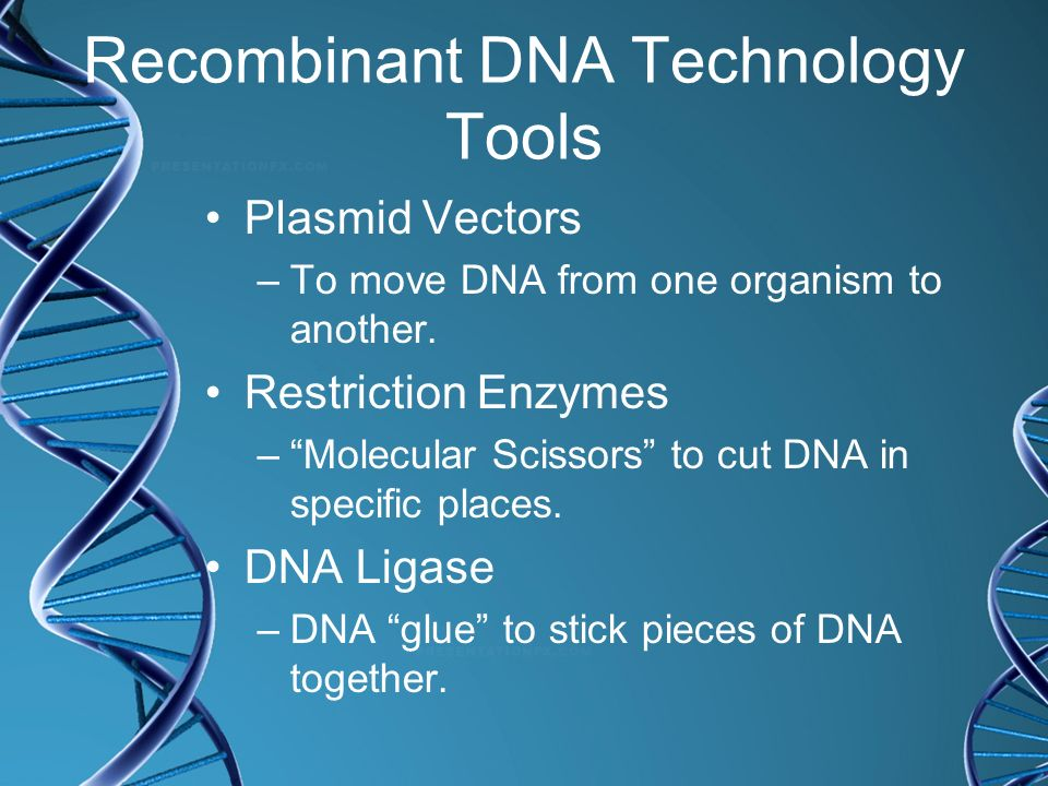 Recombinant DNA Technology Tools