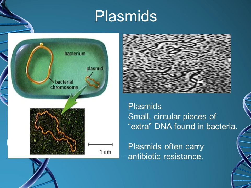 Plasmids Plasmids. Small, circular pieces of extra DNA found in bacteria. Plasmids often carry.