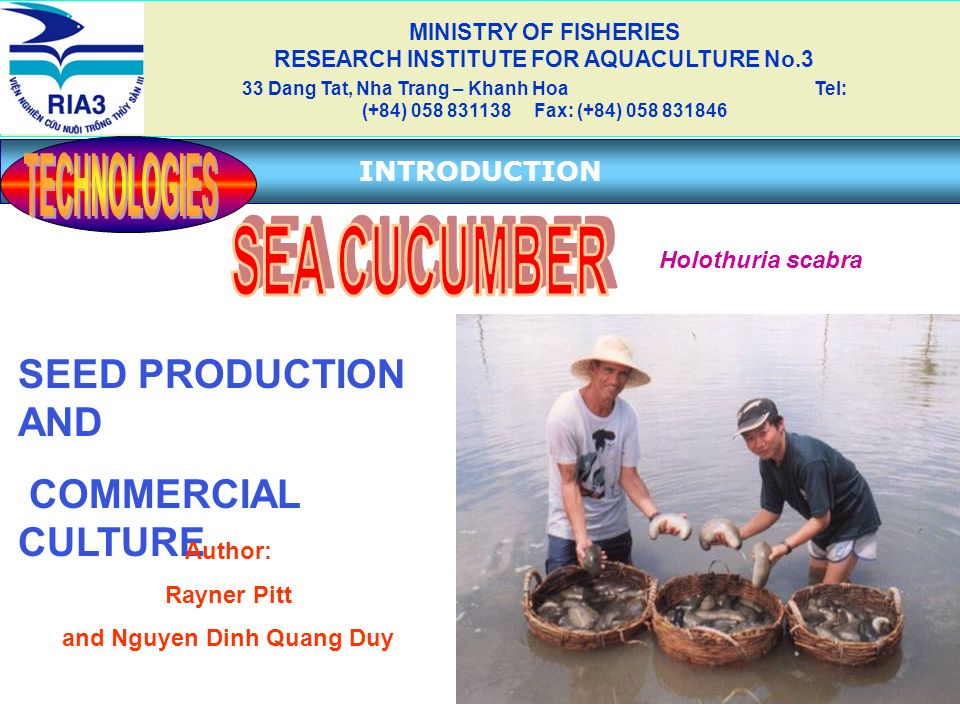 TECHNOLOGIES SEA CUCUMBER SEED PRODUCTION AND COMMERCIAL CULTURE