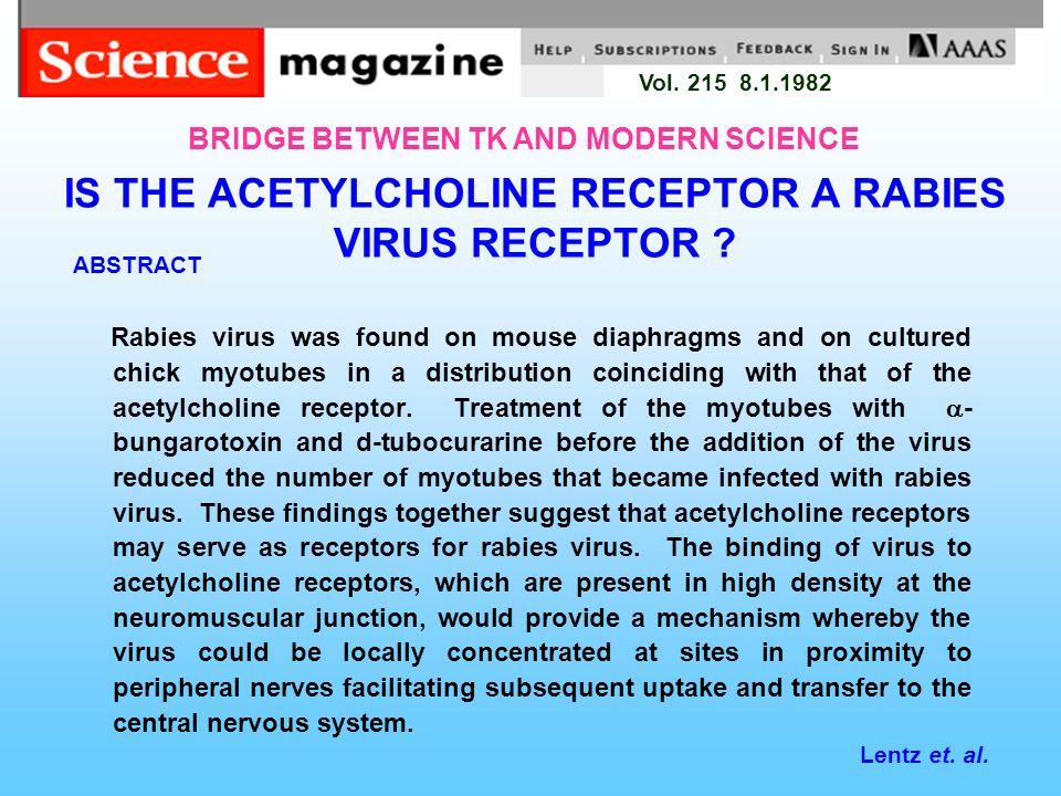 IS THE ACETYLCHOLINE RECEPTOR A RABIES VIRUS RECEPTOR