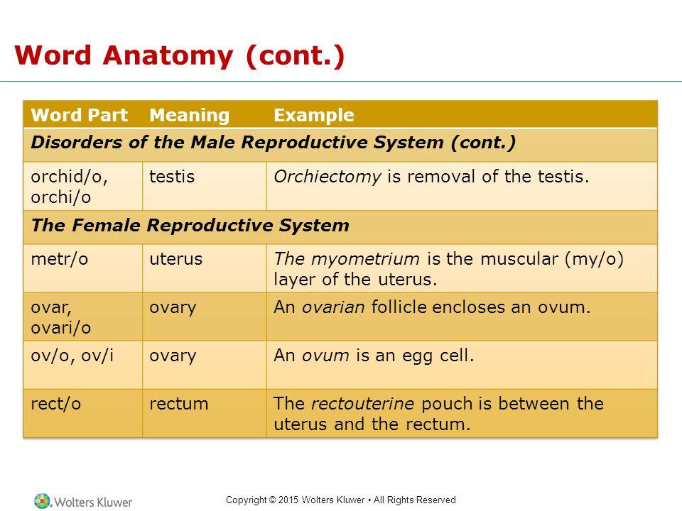 Anatomy word parts