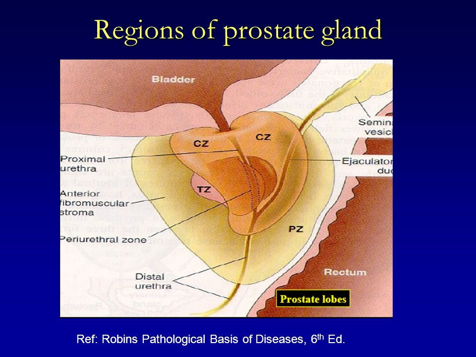 Regions of prostate gland