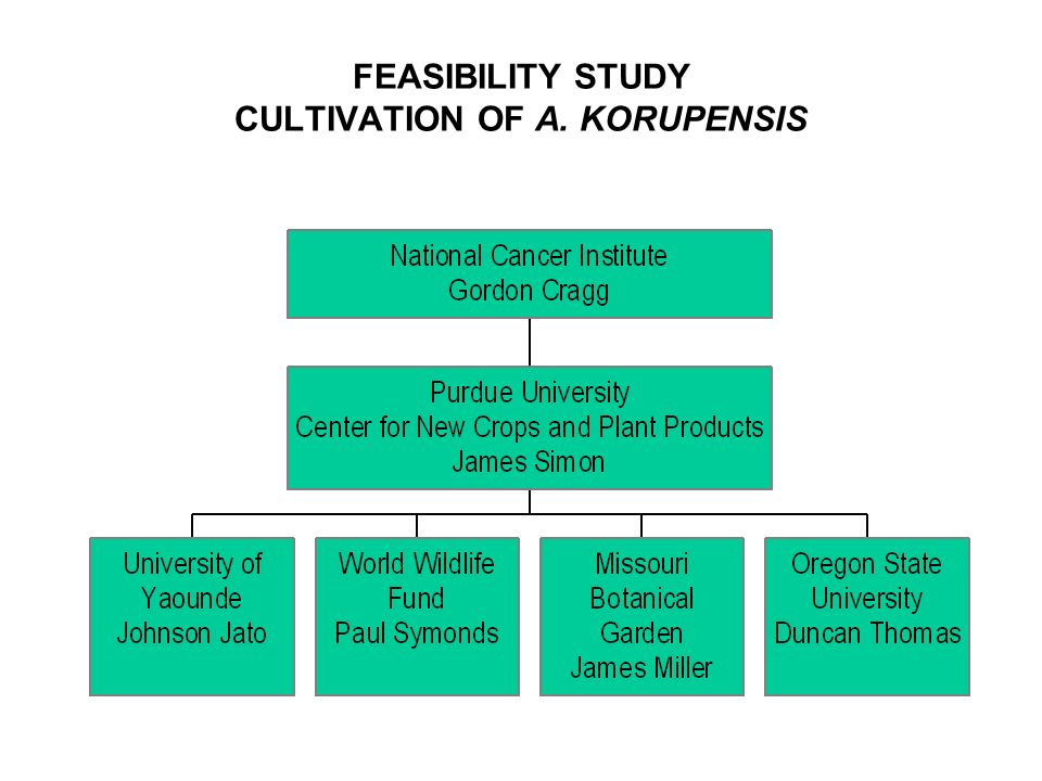 FEASIBILITY STUDY CULTIVATION OF A. KORUPENSIS