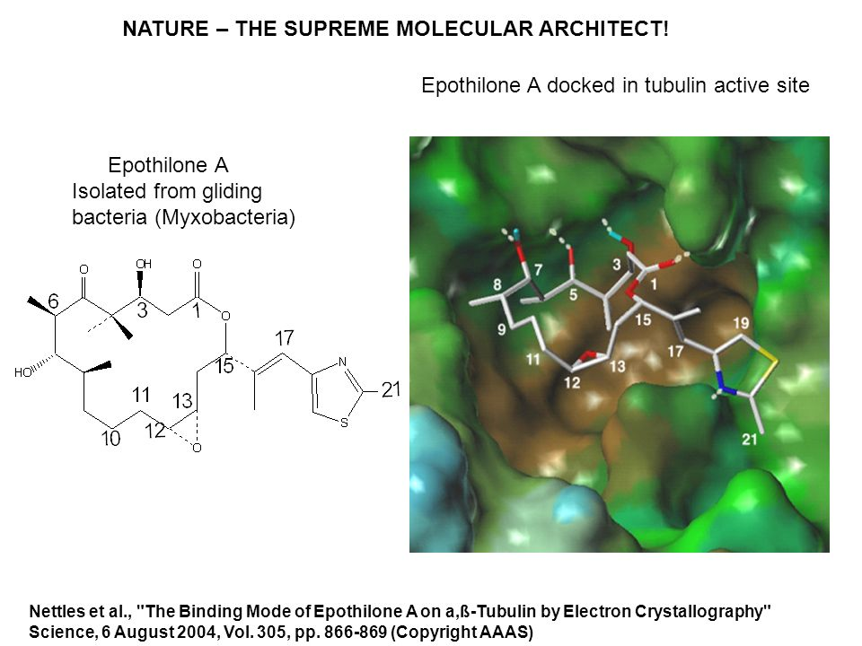 NATURE – THE SUPREME MOLECULAR ARCHITECT!