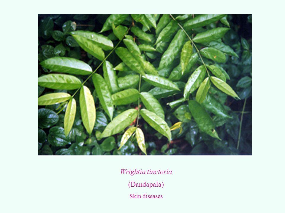 Wrightia tinctoria (Dandapala) Skin diseases