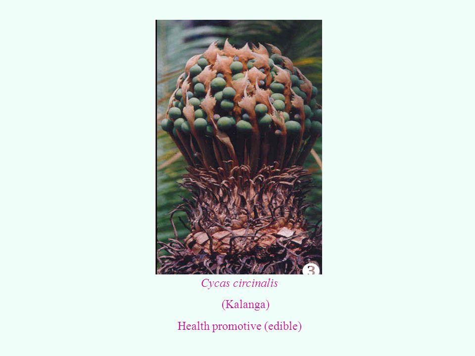 Health promotive (edible)