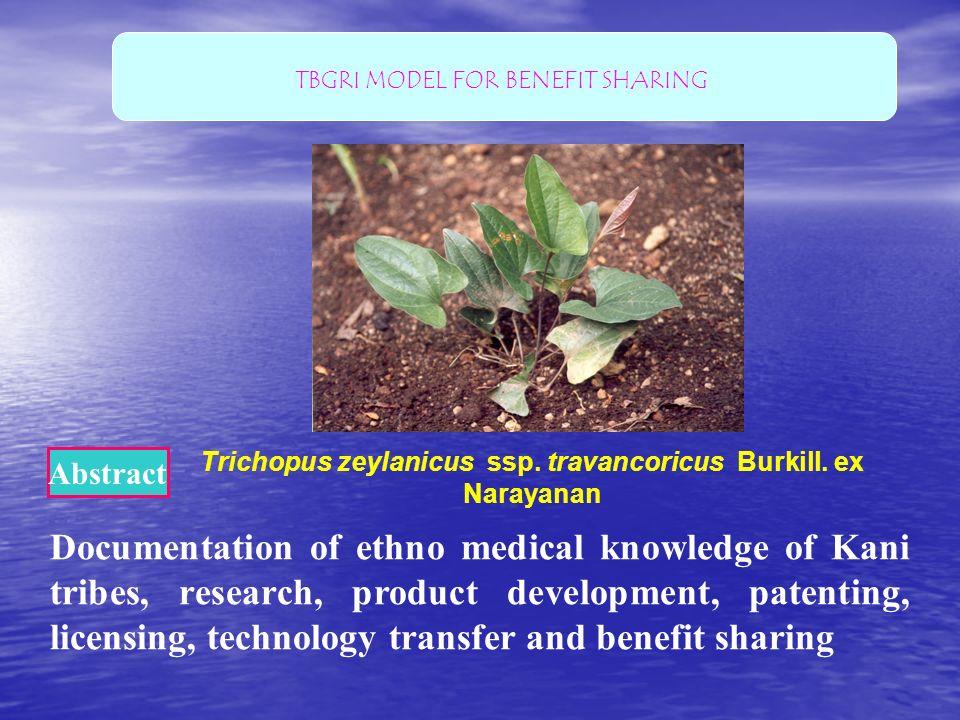 Trichopus zeylanicus ssp. travancoricus Burkill. ex Narayanan