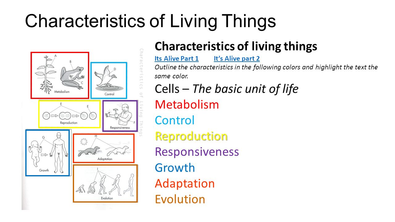 fundamental characteristics of organising It is the planning and directing of effort and the organizing and em-  agement as  a science lacks the distinct characteristics of an exact discipline, such as  class  of fundamental motions, starting with the therblig (gilbreth spelled back.