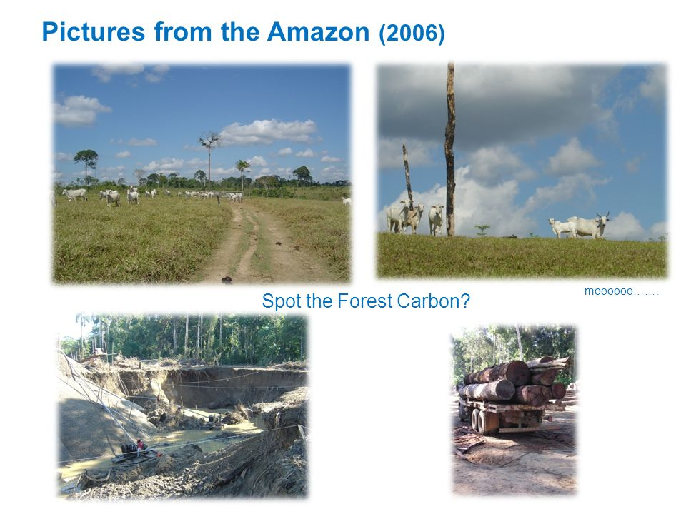 Pictures from the Amazon (2006)
