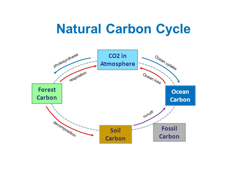 Natural Carbon Cycle CO2 in Atmosphere Forest Carbon Ocean Carbon