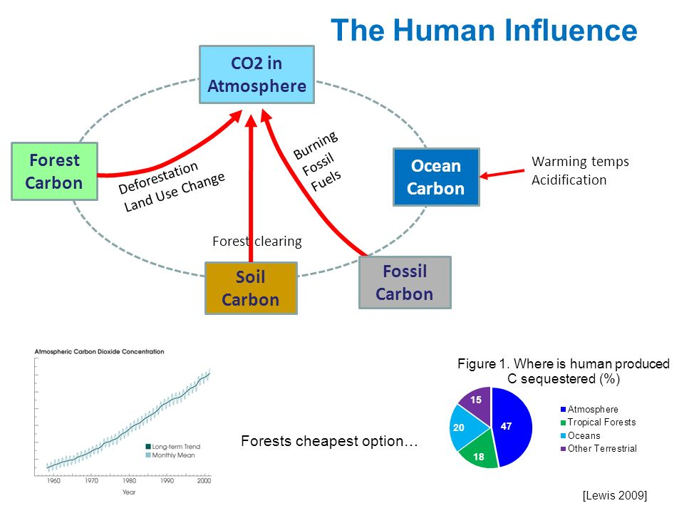 The Human Influence CO2 in Atmosphere Forest Carbon Ocean Carbon