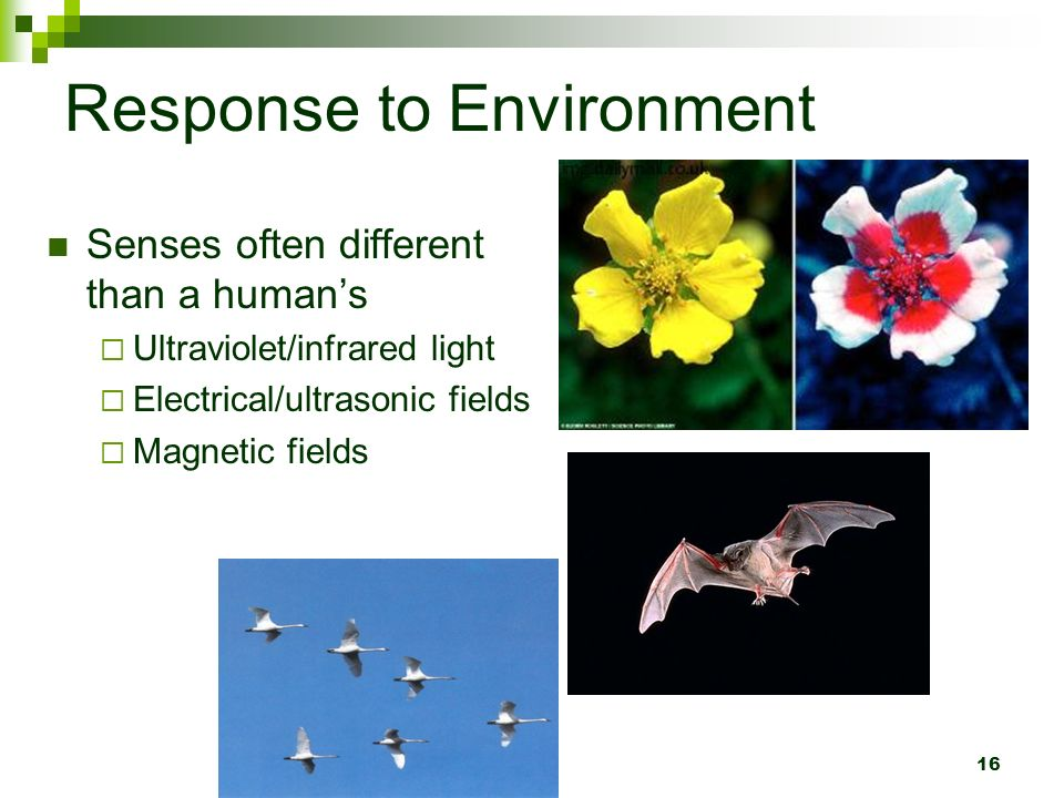 environment reaction Reactions, effects, and fates of chemical species in the water, air, terrestrial, and biological environment and the effects of human activities thereon environmental chemistry environmental chemistry is that branch of chemical science that deals with the environmental sphere, the.