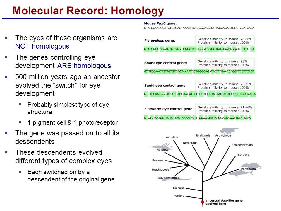 download optical biosensors, 2nd edition: