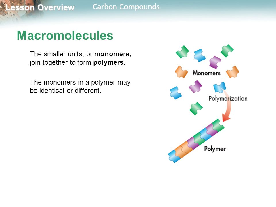 Macromolecules The smaller units, or monomers, join together to form polymers.