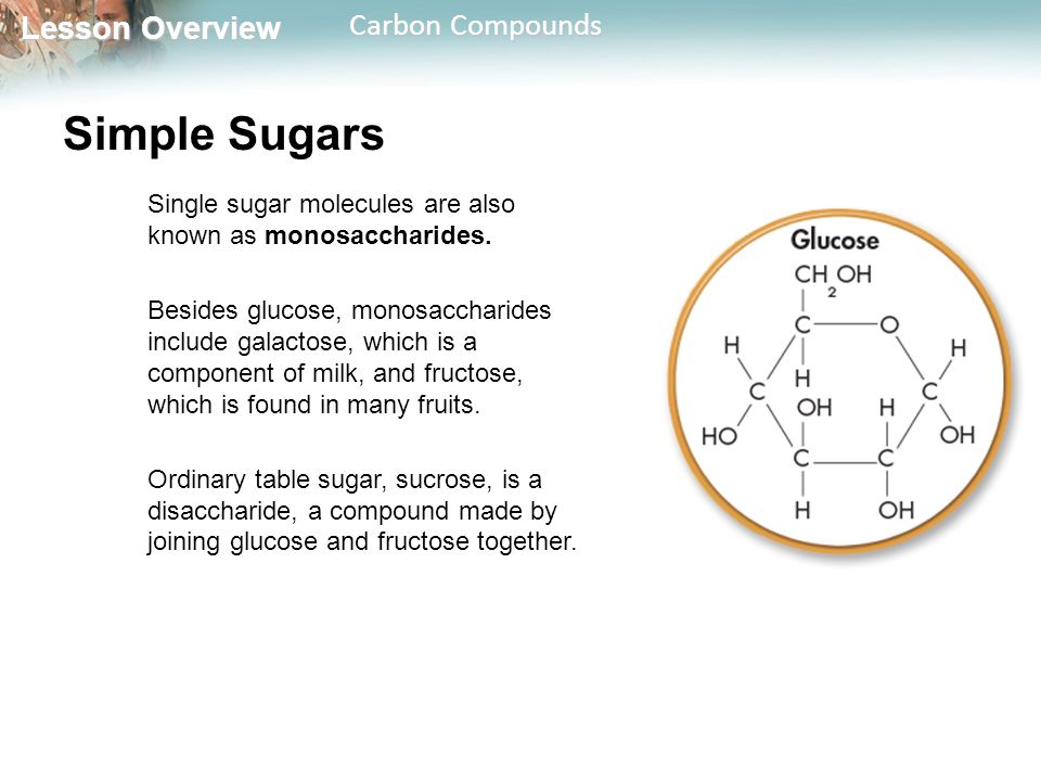 Simple Sugars Single sugar molecules are also known as monosaccharides.
