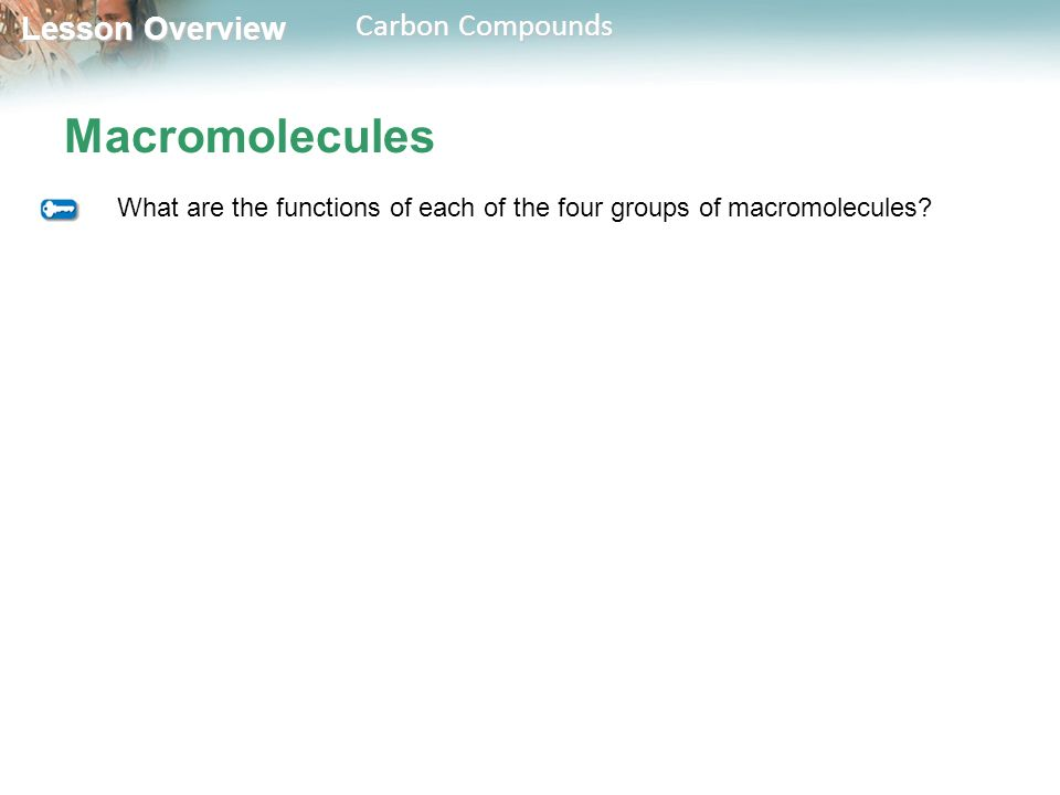 Macromolecules What are the functions of each of the four groups of macromolecules