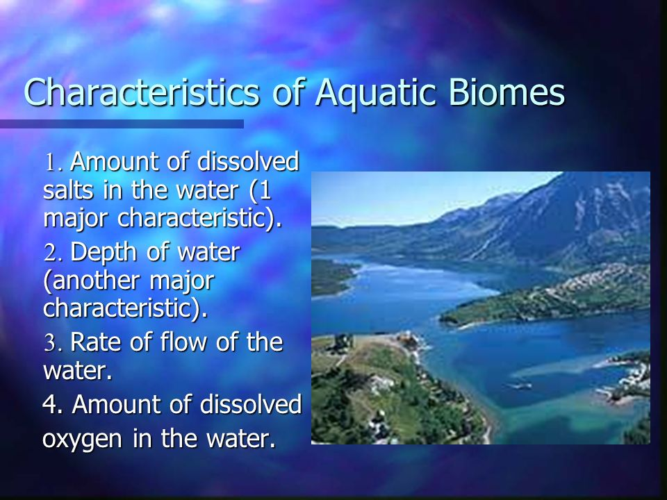 the main characteristics of water Basic terms of dam characteristics   downstream side of the dam to the highest part of the dam which would impound water toe of dam.