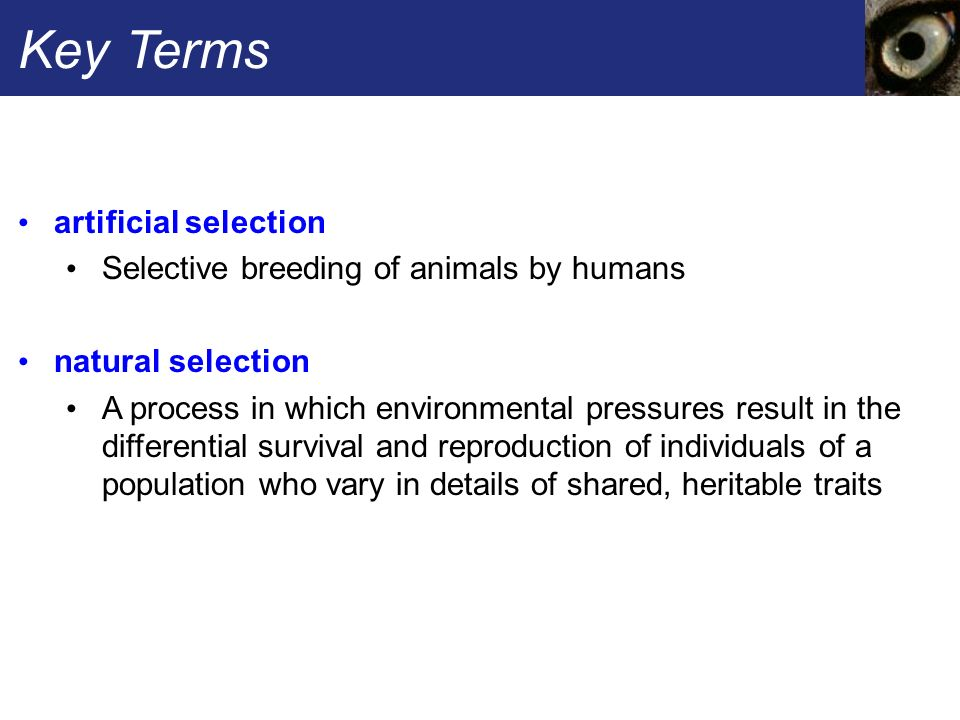 understanding natural selection in humans and animals Natural selection definition, the process by which forms of life having traits that   in the survival of those individuals from a population of animals or plants that.