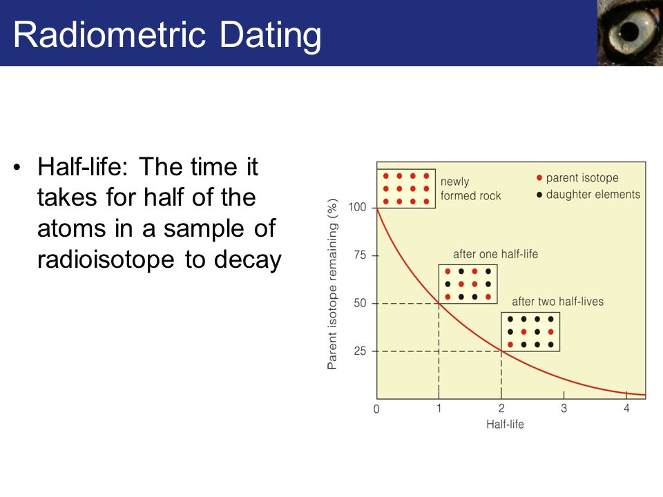 radiometric age dating half life How do we determine the age of a rock  principles of radiometric dating  a  half-life is the time it takes for half of the parent radioactive element to decay to a .
