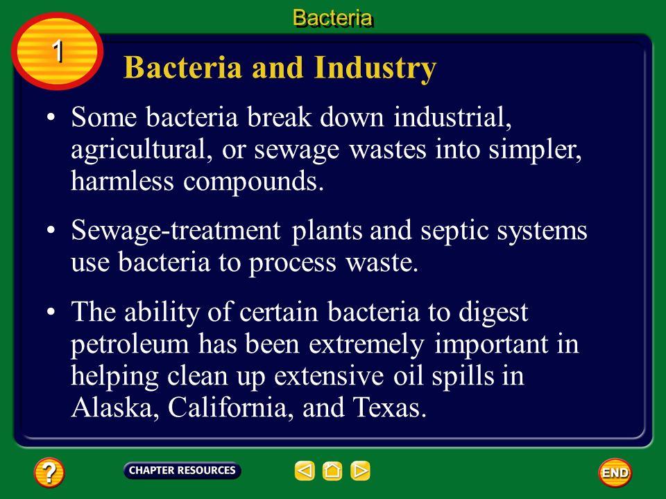 how to wetlands break down bacteria