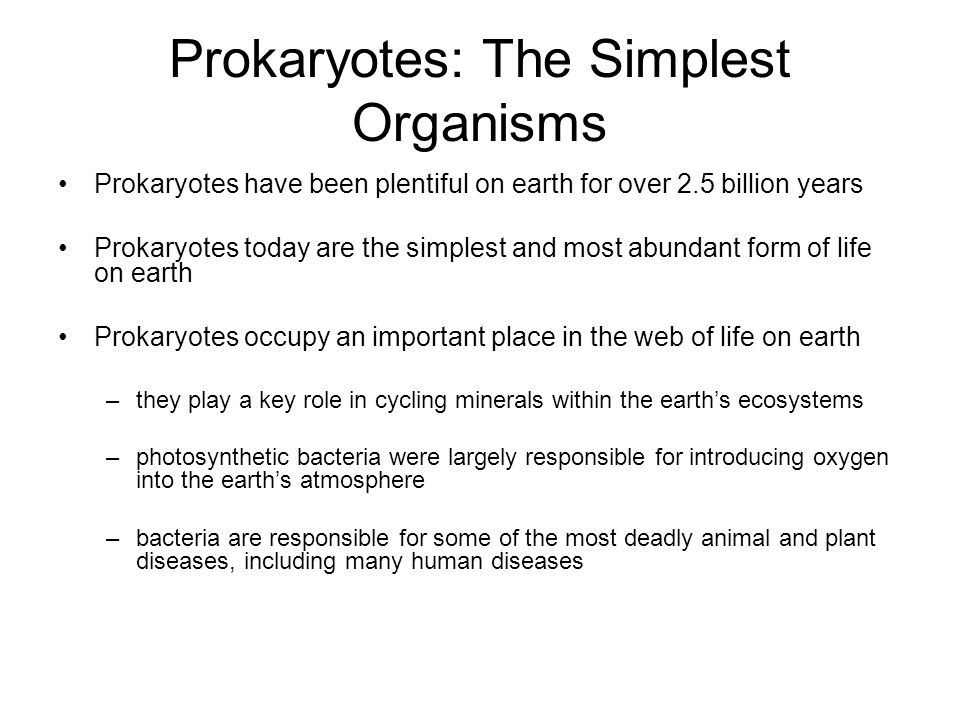 Prokaryotes Ch ppt download