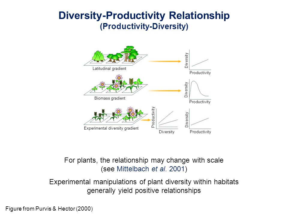 relationship between plant diversity and productivity