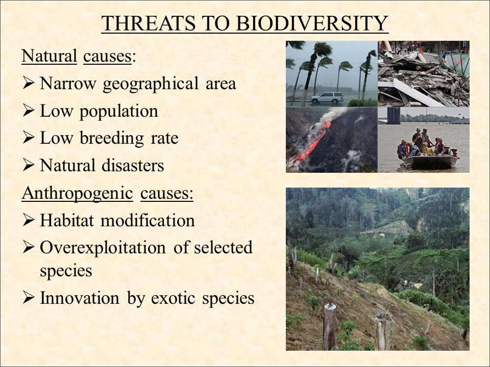 threats to biodiversity Biodiversity is a fragile thing, susceptible to all sorts of threats even as it supports all life on earth it is constantly facing threats and damage that is almost.