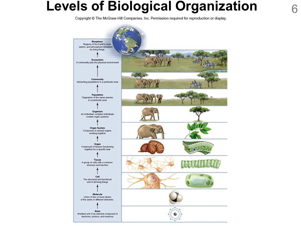 biological characteristics of organizational behavior These factors play a vital role in determining one's behavior in a social  organization physical characteristics include, but are not limited to.