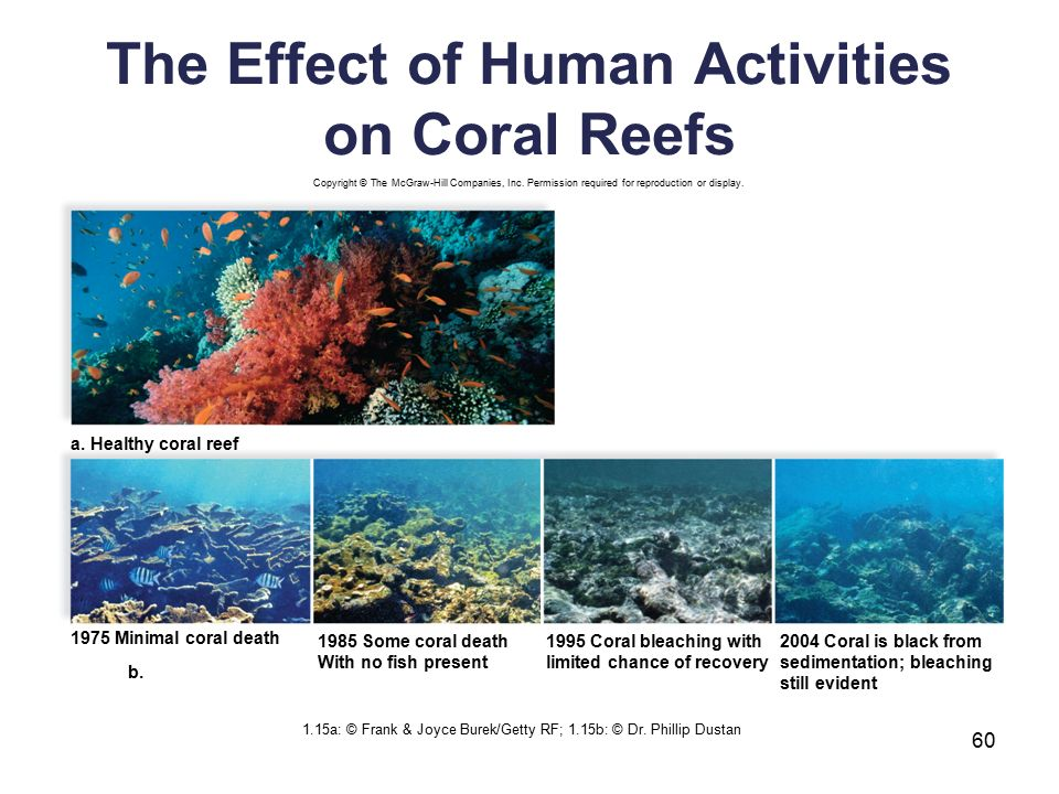 the destruction of rainforests and coral reefs as contributors to the extinction of species in human Biodiversity or biological diversity is a term that describes the variety of living beings on earth in short, it is described as degree of variation of life biological diversity encompasses microorganism, plants, animals and ecosystems such as coral reefs, forests, rainforests, deserts etc.