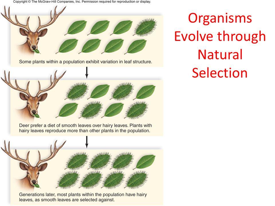 Ap Biology Natural Selection Ppt