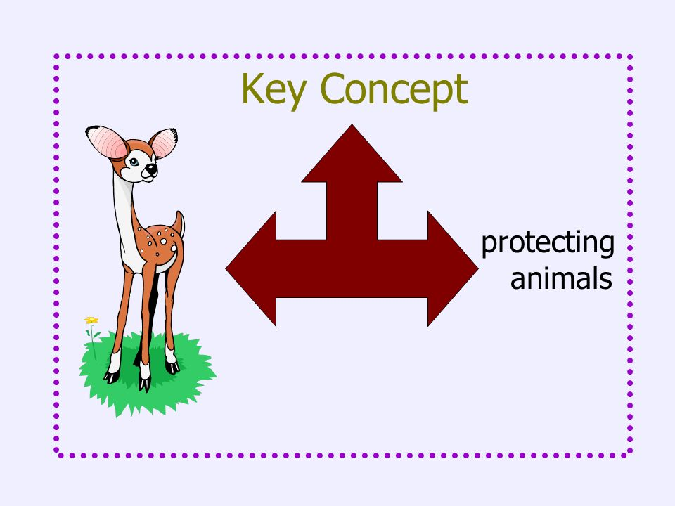 Key Concept protecting animals