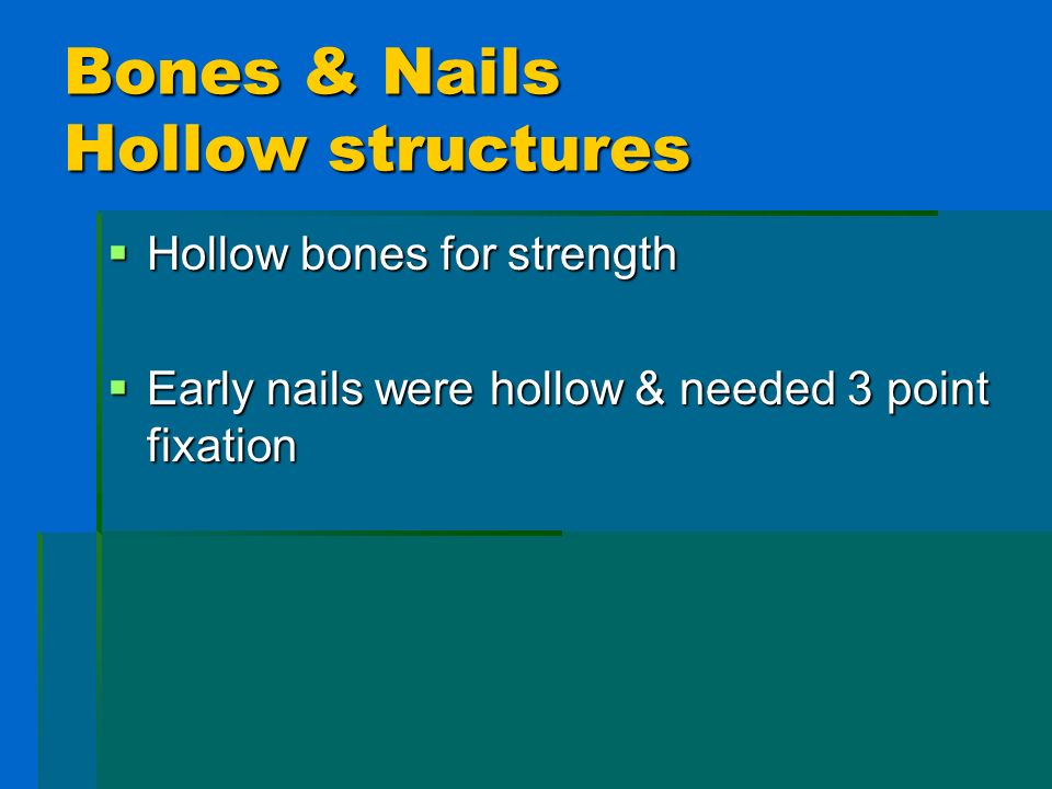 Bones & Nails Hollow structures