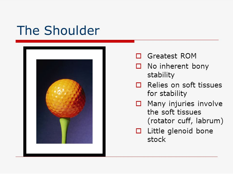 The Shoulder Greatest ROM No inherent bony stability