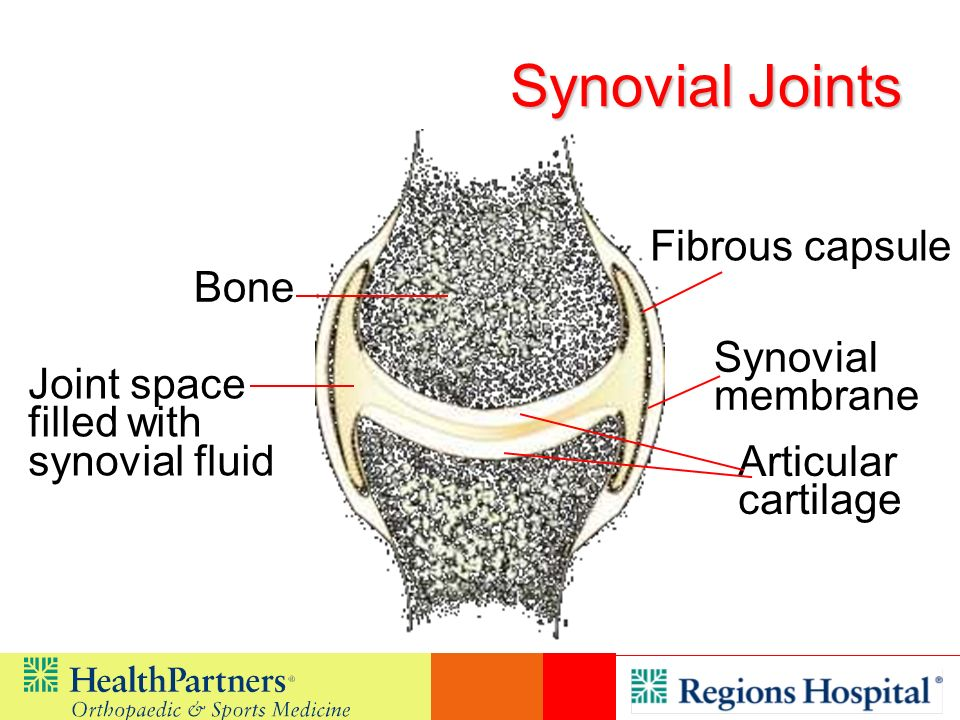Synovial Joints Fibrous capsule Bone Synovial membrane