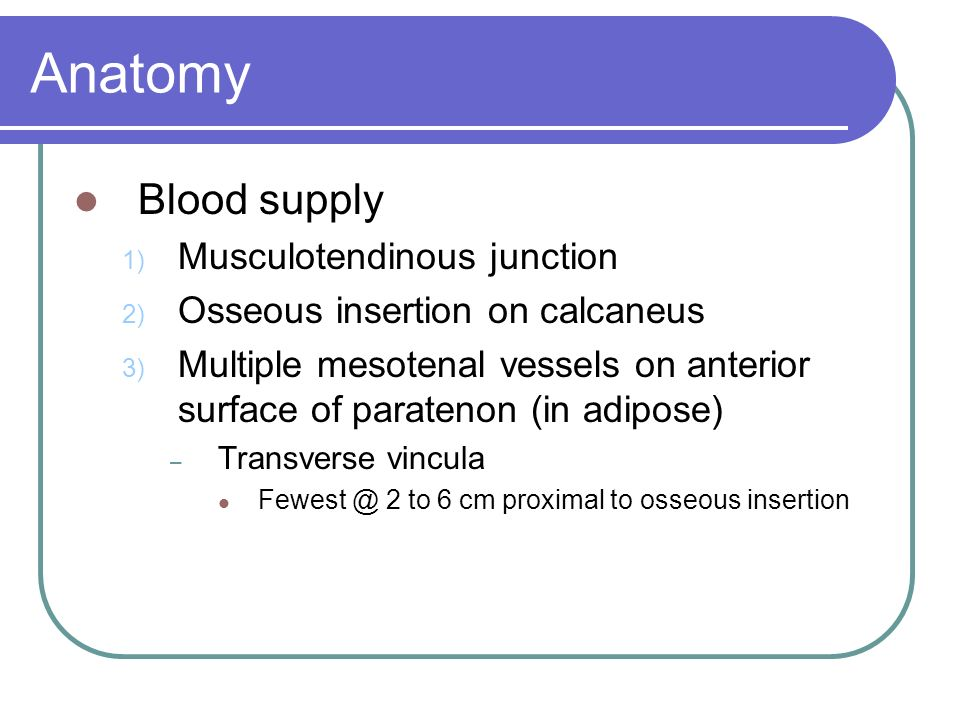 Anatomy Blood supply Musculotendinous junction