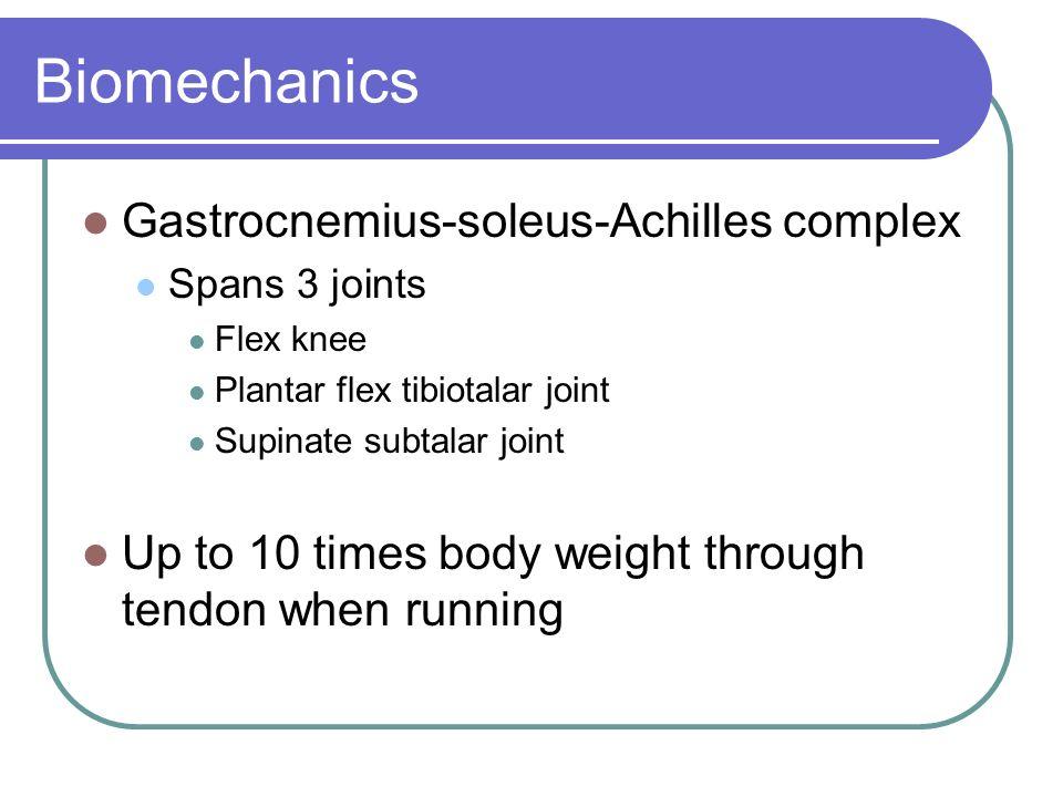 Biomechanics Gastrocnemius-soleus-Achilles complex