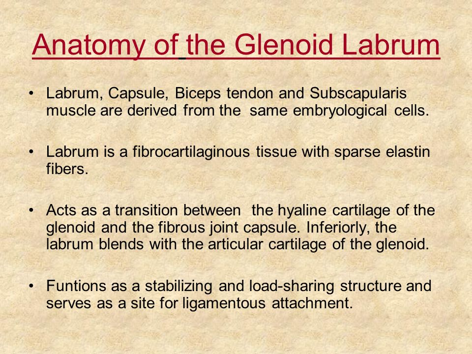 Anatomy of the Glenoid Labrum