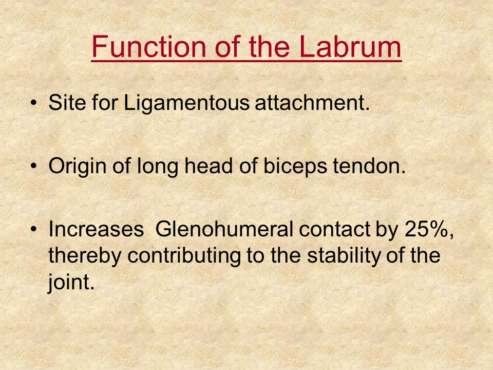 Function of the Labrum Site for Ligamentous attachment.